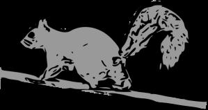 squirrel-hi