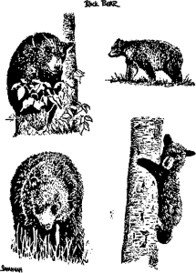 Bear-Grouping-2016011955-800px