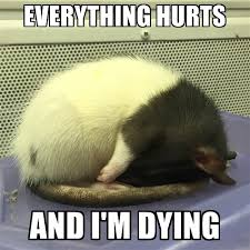 rat-everything-hurts
