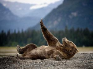 adorable-animals-stretching-bear