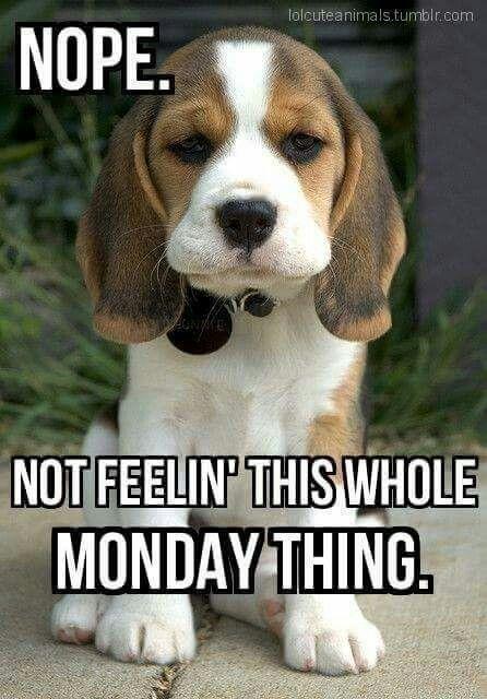 Monday-Meme-16