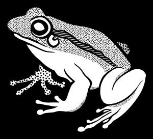 frog-lineart